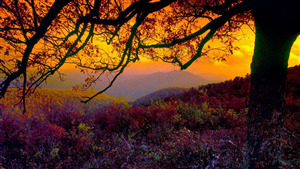 Shenandoah National Park Nature Wallpaper